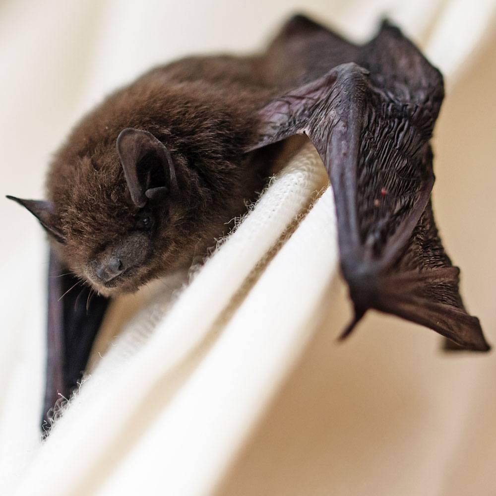 Bat Surveys